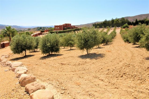 7000 sq metres of olive orchards